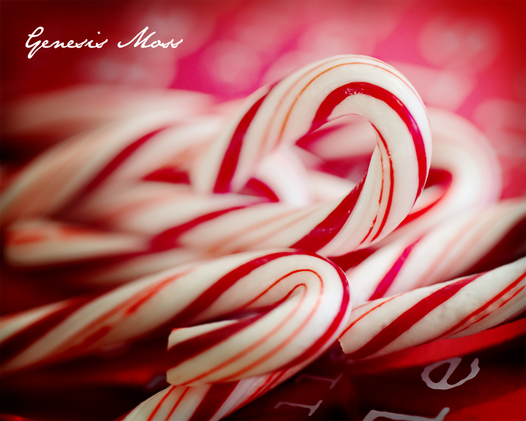 Candy Cane Food Photographer