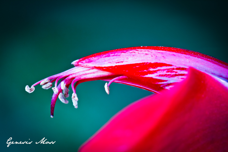 los angele flower photography