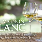 The skinny on Sauvignon Blanc